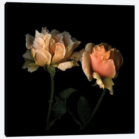 La Vie En Rose Canvas Print #MAG37} by Magda Indigo Canvas Art
