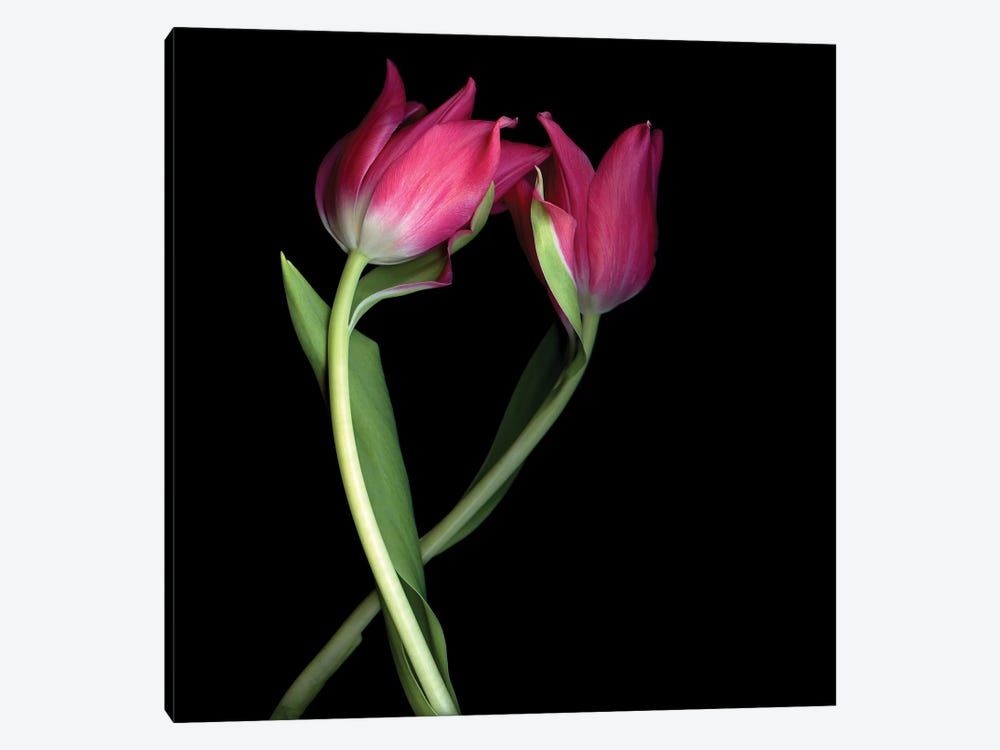 Tulips Pink I by Magda Indigo 1-piece Canvas Wall Art