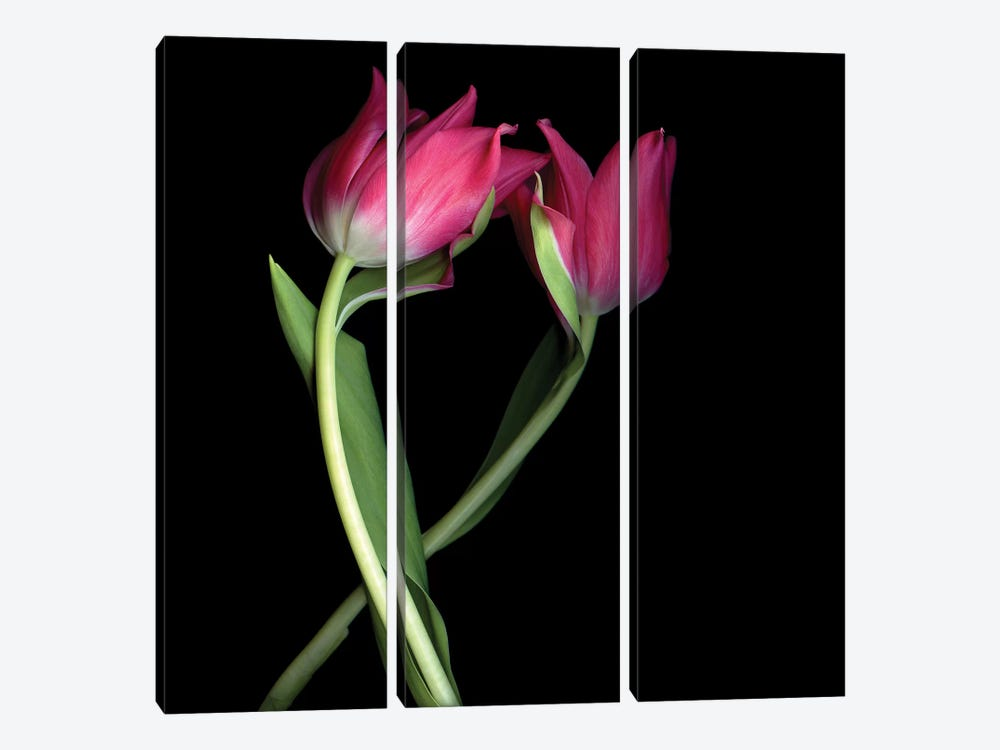 Tulips Pink I by Magda Indigo 3-piece Canvas Art