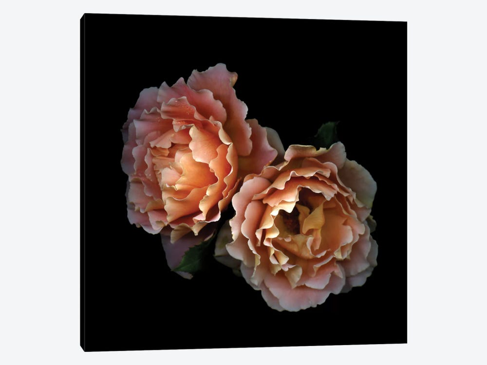 Le Temps des Roses 1-piece Canvas Artwork