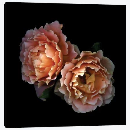 Le Temps des Roses Canvas Print #MAG39} by Magda Indigo Art Print