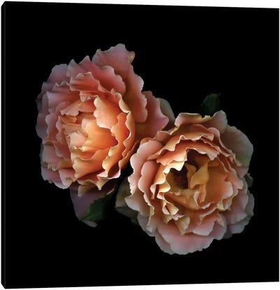 Le Temps des Roses Canvas Art Print