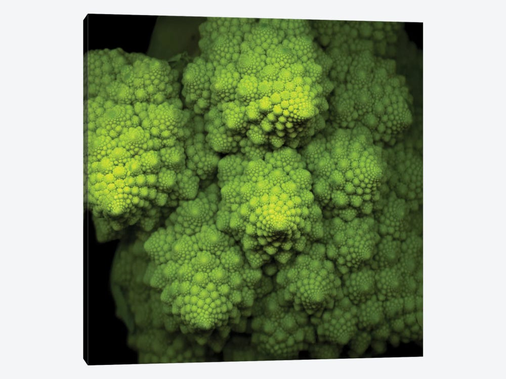 Lime Green Broccoflower by Magda Indigo 1-piece Canvas Print