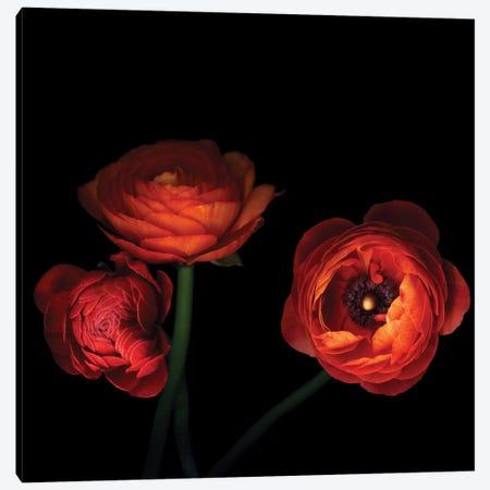 l'Orangerie Canvas Print #MAG43} by Magda Indigo Canvas Art