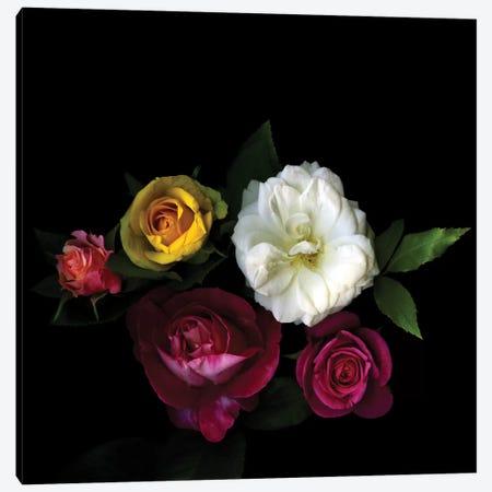 A Rose Festival Canvas Print #MAG4} by Magda Indigo Canvas Print