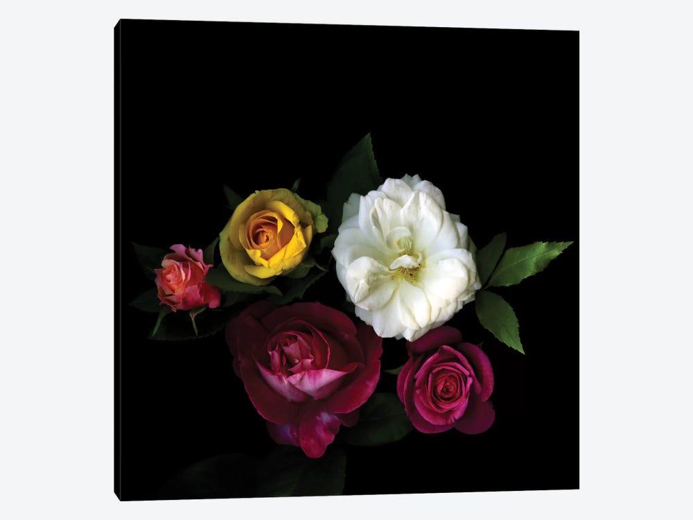 A Rose Festival by Magda Indigo 1-piece Canvas Wall Art