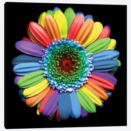 Rainbowflower Canvas Print #MAG58} by Magda Indigo Canvas Art Print
