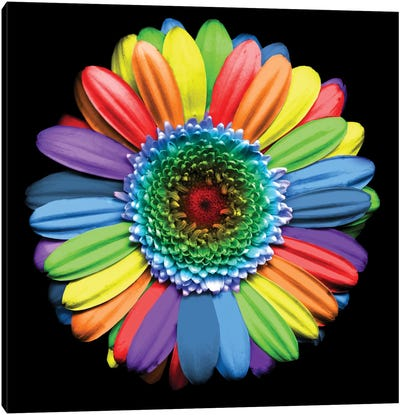 Rainbowflower Canvas Art Print
