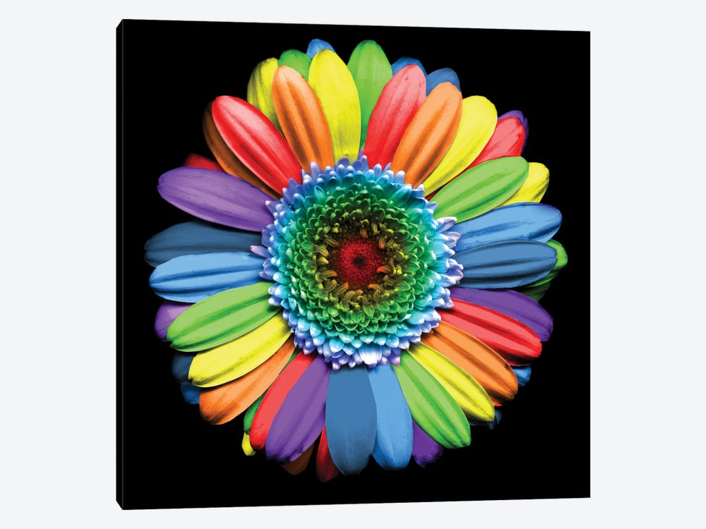 Rainbowflower by Magda Indigo 1-piece Canvas Print