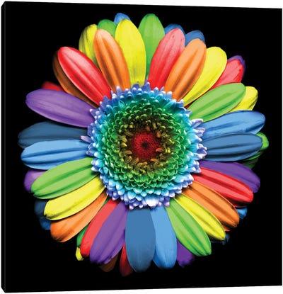 Rainbowflower Canvas Art Print