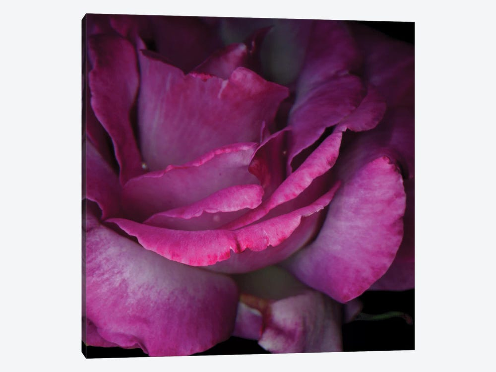 Read Between The Petals by Magda Indigo 1-piece Canvas Wall Art