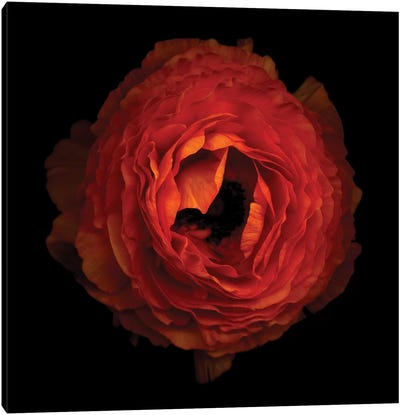 Ruffled Petals Canvas Art Print