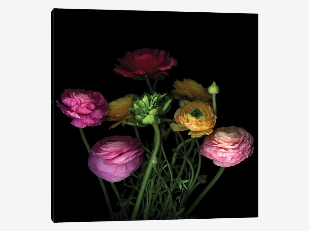 Say It With Flowers I by Magda Indigo 1-piece Canvas Wall Art