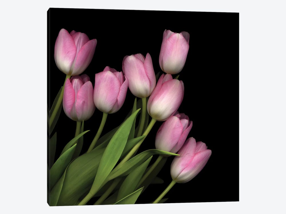 Soft Pastel Pink by Magda Indigo 1-piece Canvas Print