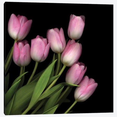 Soft Pastel Pink Canvas Print #MAG69} by Magda Indigo Canvas Art
