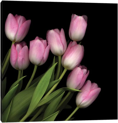 Soft Pastel Pink Canvas Art Print