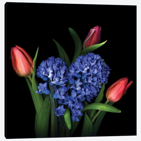 A Spring Flower Sonata Canvas Print #MAG6} by Magda Indigo Canvas Print