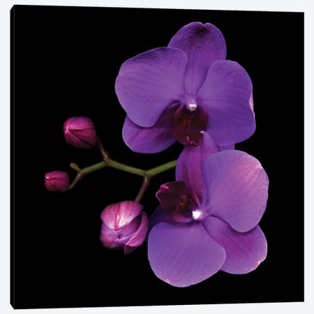 The Color Purple Canvas Print #MAG75} by Magda Indigo Canvas Wall Art