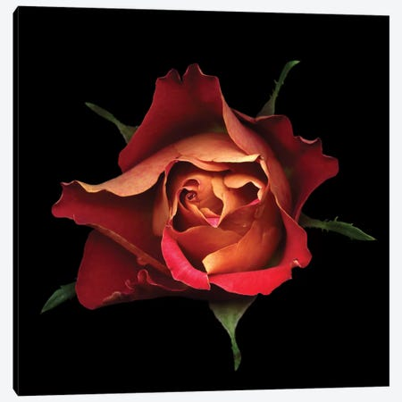 The Kiss Of A Rose Canvas Print #MAG83} by Magda Indigo Canvas Wall Art