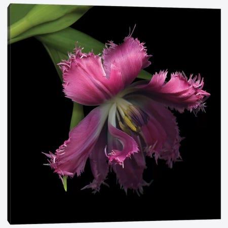 Tulip…Revealed 3-Piece Canvas #MAG91} by Magda Indigo Canvas Print