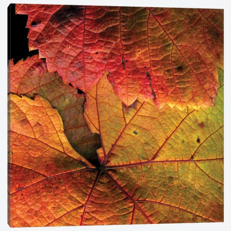 Vine Leaves Canvas Print #MAG94} by Magda Indigo Canvas Artwork
