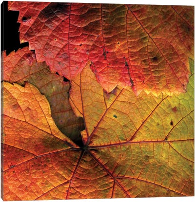 Vine Leaves Canvas Art Print