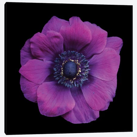 Vivace Canvas Print #MAG95} by Magda Indigo Canvas Artwork