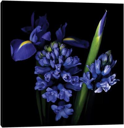Wednesday… Winter… The Blues… Canvas Art Print