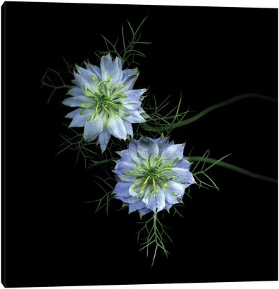 Winter Blues And Light In The Dark Season Canvas Print #MAG99