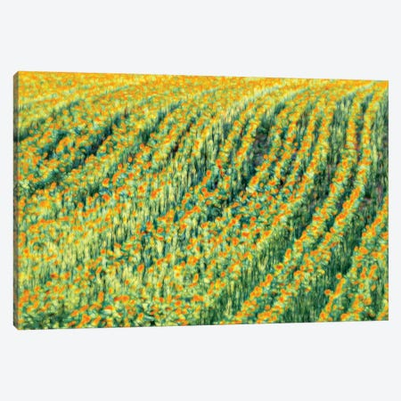 Abstract Sunflowers Canvas Print #MAO106} by Marco Carmassi Art Print