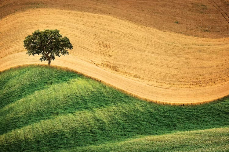 Tree On The Hill Canvas Wall Art By Marco Carmassi Icanvas