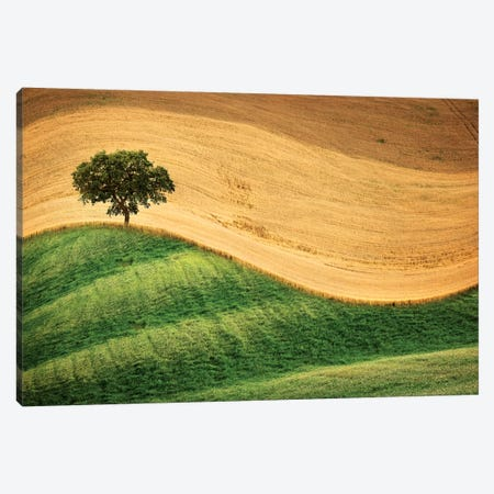 Tree On The Hill Canvas Print #MAO113} by Marco Carmassi Art Print