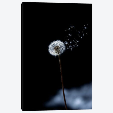 Just A Wind Blow Canvas Print #MAO121} by Marco Carmassi Canvas Artwork