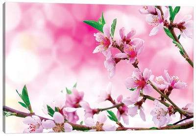 It's Spring Canvas Art Print