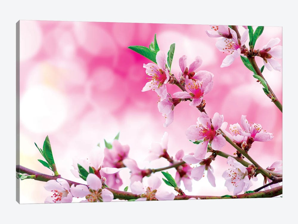It's Spring by Marco Carmassi 1-piece Canvas Wall Art