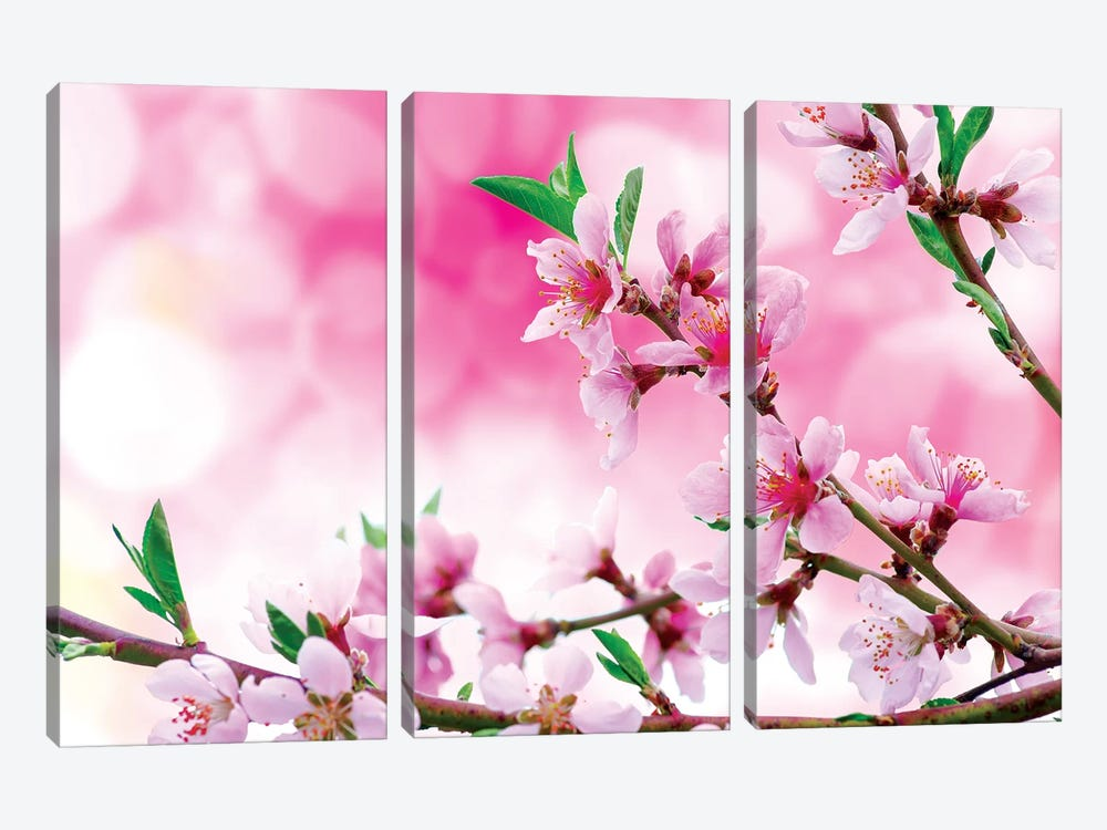 It's Spring by Marco Carmassi 3-piece Canvas Artwork