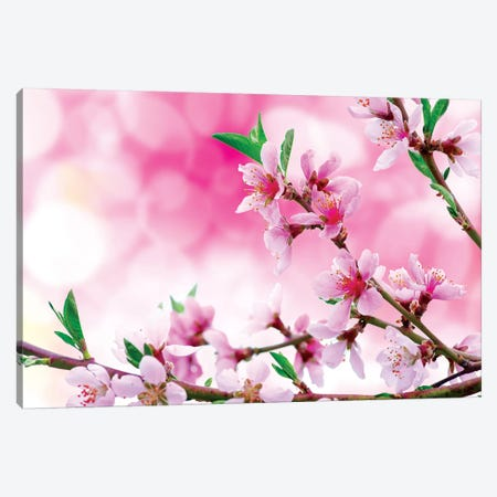 It's Spring Canvas Print #MAO157} by Marco Carmassi Canvas Art