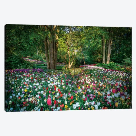 Paradise Of Flowers Canvas Print #MAO170} by Marco Carmassi Canvas Print