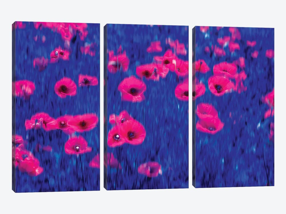 Poppies Impressions by Marco Carmassi 3-piece Canvas Wall Art
