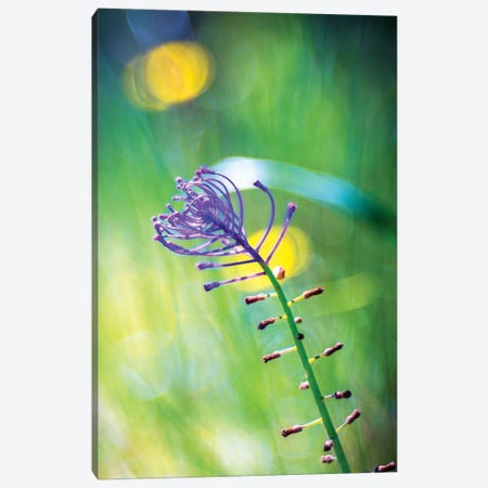 Purple Flower Canvas Print #MAO174} by Marco Carmassi Canvas Artwork