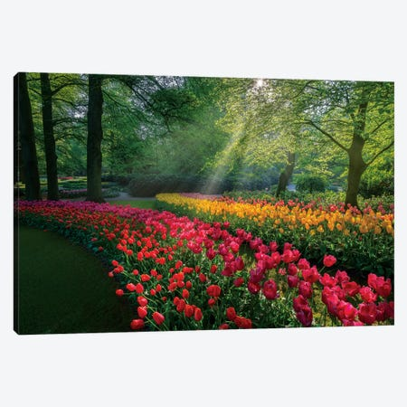 Special Garden Canvas Print #MAO186} by Marco Carmassi Canvas Print
