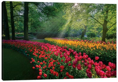 Special Garden Canvas Art Print