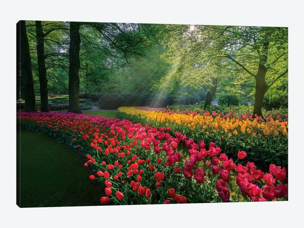 Special Garden by Marco Carmassi 1-piece Canvas Art