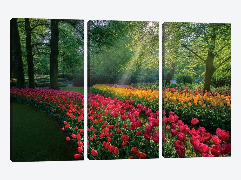 Special Garden by Marco Carmassi 3-piece Canvas Artwork