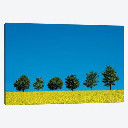 The Six Trees Canvas Print #MAO195} by Marco Carmassi Canvas Wall Art