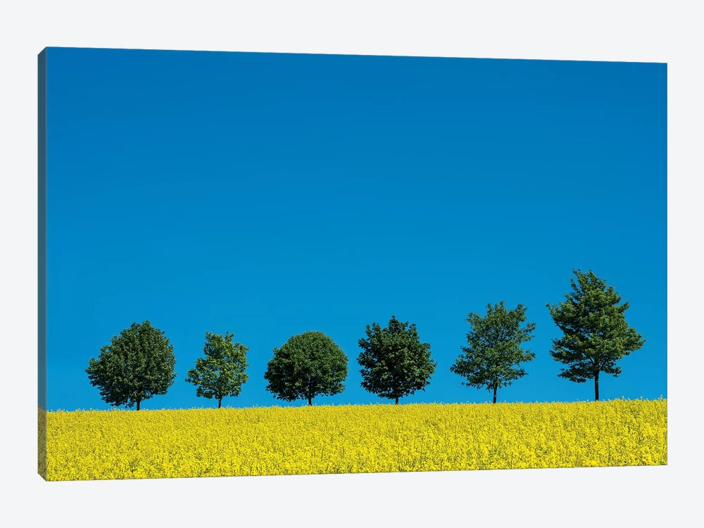 The Six Trees 1-piece Canvas Art