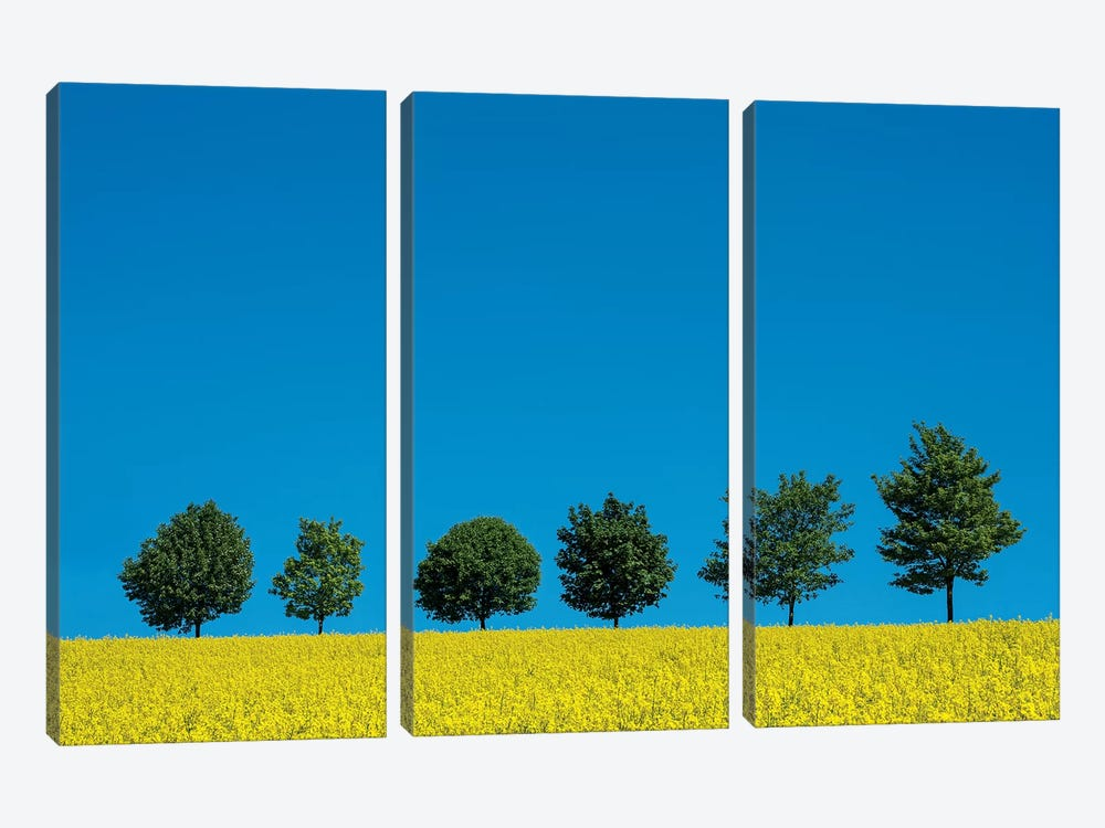 The Six Trees 3-piece Canvas Wall Art