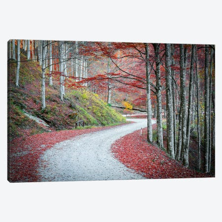 Tuscany Forest Canvas Print #MAO197} by Marco Carmassi Canvas Art
