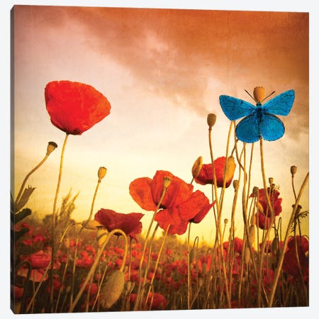 Poppies Dream Canvas Print #MAO20} by Marco Carmassi Canvas Wall Art