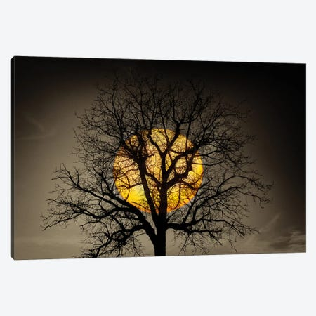 Sunset Over the Tree Canvas Print #MAO214} by Marco Carmassi Canvas Print